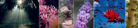Photo credit: UCR Botanic Gardens (http://gardens.ucr.edu/)