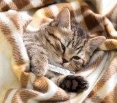 kitten-thermometer